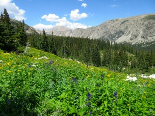 Flowers still doing okay up on the Buchanan Pass trail.