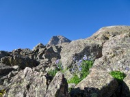 Summit hoves into view amongst the Sky Pilots and Columbines.